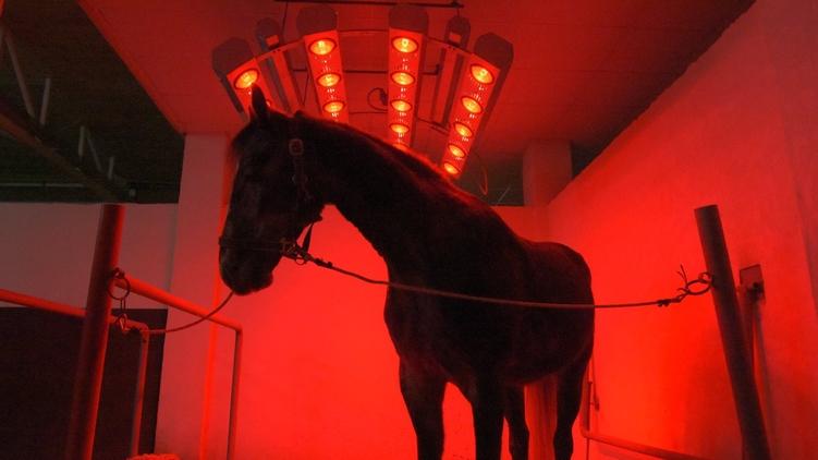 Солярий, в котором сохнут кони, фото: Аркадий Манн,