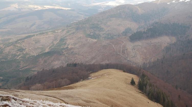 Несмотря на мораторий, лес-кругляк вывозят из Украины на запад эшелонами, zak-kor.net
